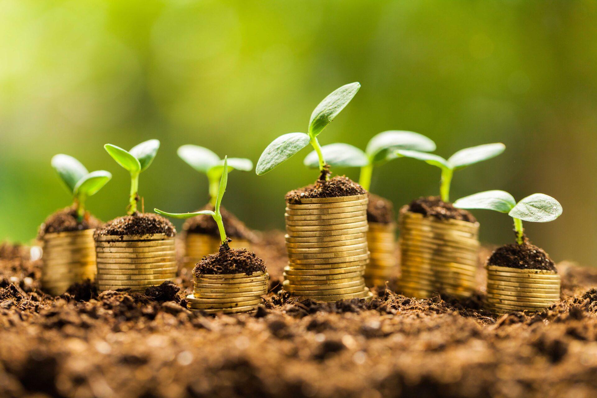 Petites plantes poussant sur des pièces en or secteur de l'agribusiness allemand